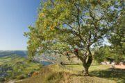 Uitzicht over het Moezeldal vanaf Landal