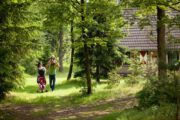 Vakantiehuisjes van Landal in het bos bij Eerbeek
