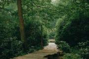 Wandelpad naar het tiny house in het bos