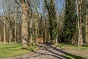 Vakantie in het bos in Rheezerveen